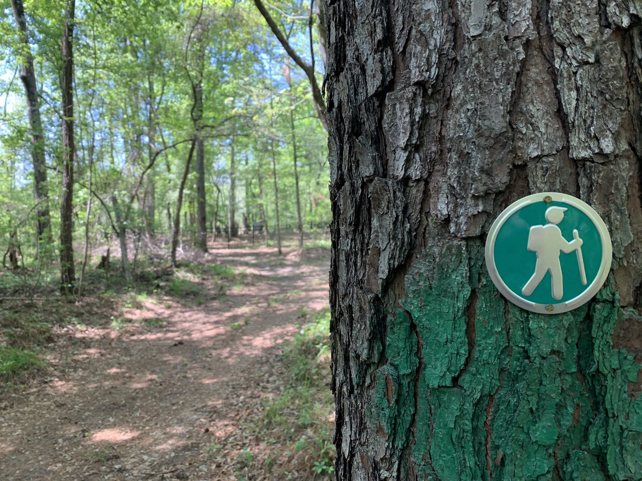 Sign image in green of a hiker posted on a tree, denoting the new green trail route.